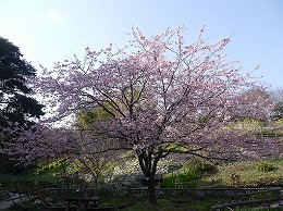 45 三月 白野江.jpg