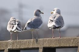 8 1月鳥撮り.jpg
