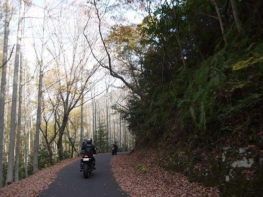 コバルトライン(山口).jpg
