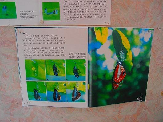 PA200973.jpg