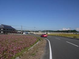 122  三光村コスモス(10月).jpg
