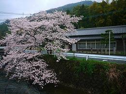 45  畑公民館 名もなき桜(3月).jpg