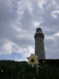 5 1月初走り 角島.jpg