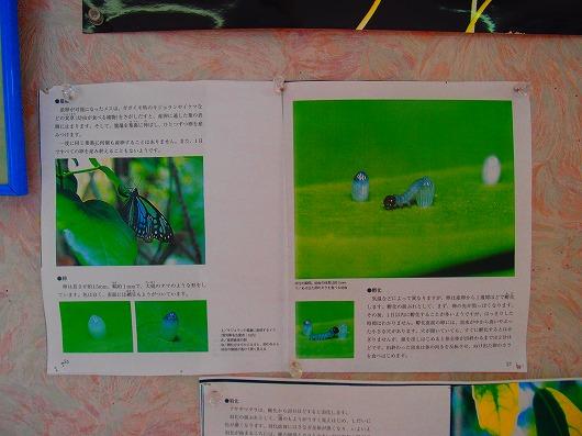 PA200972.jpg